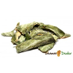 Dried Peruvian Torch 240gr or 0.5 lb - Echinopsis peruviana INCIENSES AND AROMATHERAPY